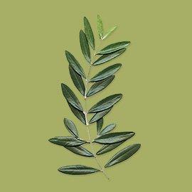 Olio extravergine<br>di oliva